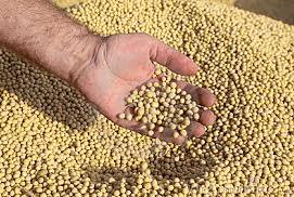 Seed teatments