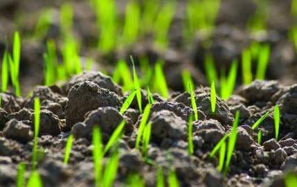 post-emerg-crops