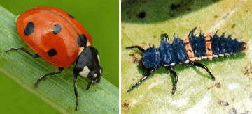 Not all pests are pests | Crop Smart