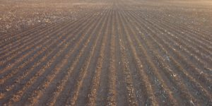Pre-emergent herbicide degradation with dry sowing