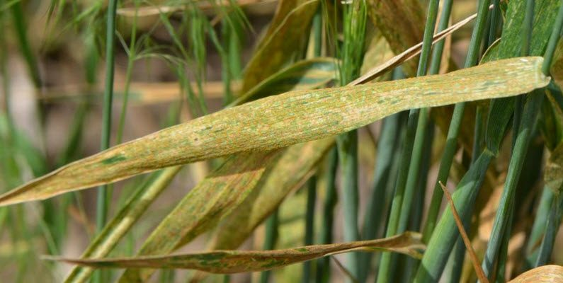Crop Smart Fungicides