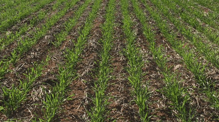 Extending the life of pre-emergent herbicides -Crop Smart